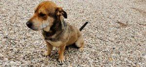 Örökbe fogadható kutyák Tapolcán