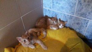 cicák 6 hetestől 6 hónaposig
