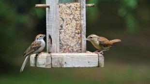 Így készítse fel a madáretetőt tavaszra
