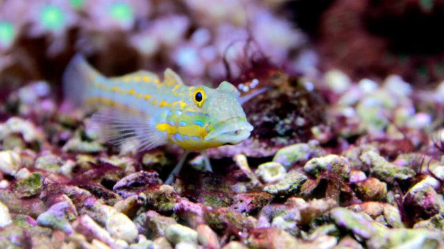 A legjobb akváriumi alapozóanyagok kiválasztása