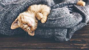 A tökéletes otthoni környezet befogadott cicák számára