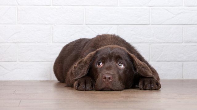 Mit tegyünk, ha fél a kutyánk?