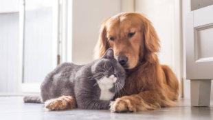 Macska és kutya közös élete