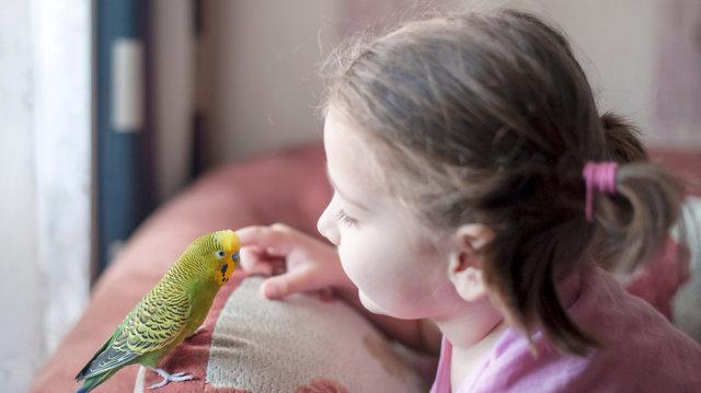 Papagáj a lakásban: előnyök és hátrányok