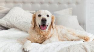 Kutyatartás a lakásban