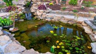 Ébresztő kertitó! Tavaszi teendők az udvar ékessége körül