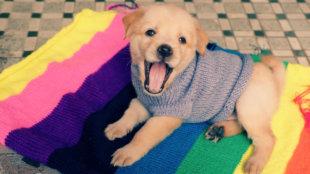Kutyadivat: aranyos ruhák kedvencünknek