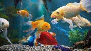Tavaszi nagytakarítás az akváriumban