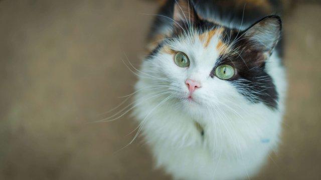 Féltékeny macska – Mit tegyünk?