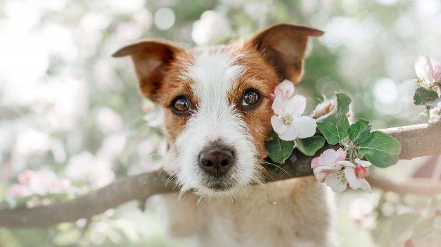 Legjobb tavaszi programok kutyusunkkal
