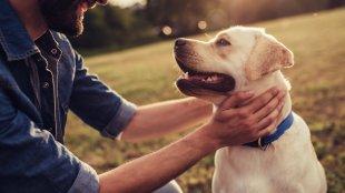 A boldog kutya-gazdi kapcsolat titka