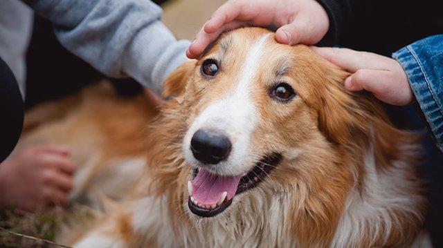 Hogyan ismerkedjen kutyusunk a gyerekekkel?