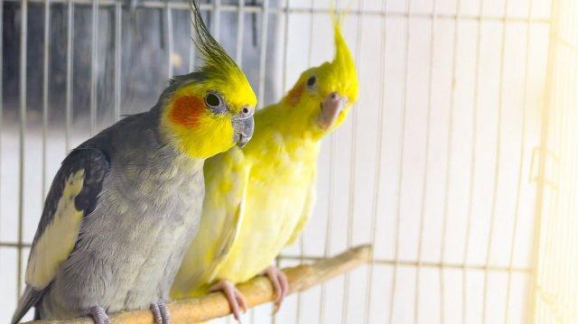 A megfelelő méretű madár-lak