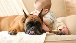 Kisbaba és kiskutya barátság