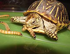 Teknősöknek