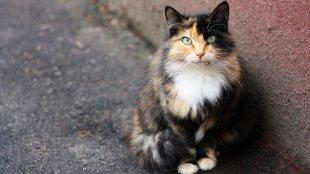 Mit tegyünk, ha elkóborolt cicát találunk