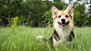 Így védd meg kutyusodat az élősködőktől!