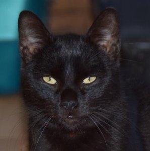 Jazzie a lazítást kedvelő fekete párduc