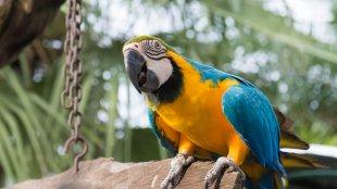 Trécselő papagájok