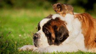 Kicsi vagy nagy kutyát vegyünk magunkhoz?