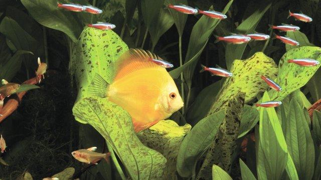 Beteg a halam? Leggyakoribb tünetek