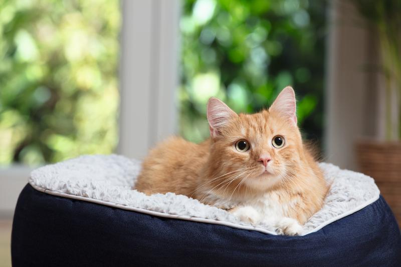 macska szájszag)
