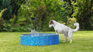 Hasznos tanácsok kutyafürdetéshez