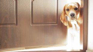 Illem az ajtónál, avagy ki lép ki először az ajtón?
