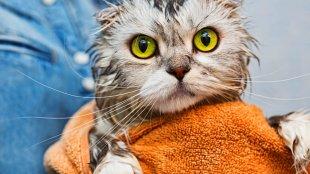 A macskafürdetés legjobb módja