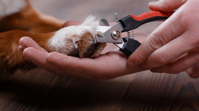 Tippek a könnyebb karomvágásért