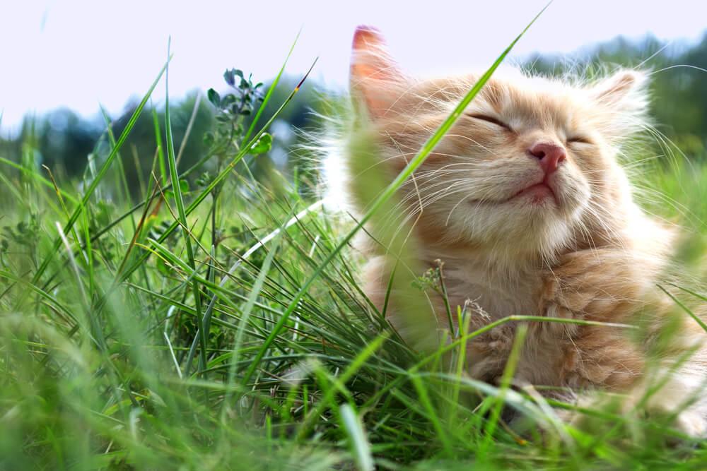Nyáron bundában! Avagy mire figyeljünk cicusunknál