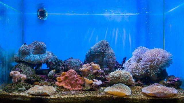 Tiszta vizet az akváriumba!