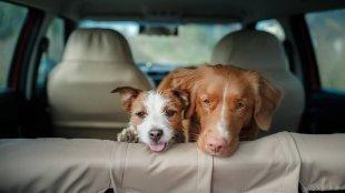 5 tipp kutyagazdiknak a stresszmentes közös utazáshoz