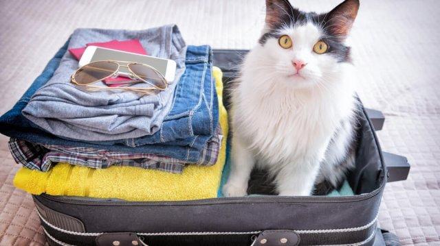 Cirmos nyaralás – elvigyem, vagy ne vigyem?