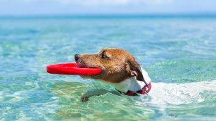 Hogyan hűtsük le kutyánkat a nyári melegben?