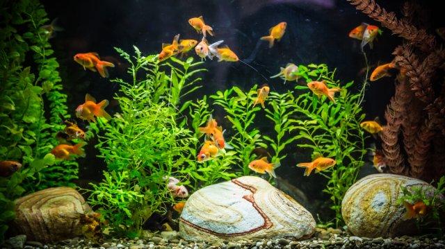 Milyen növényeket tegyünk az akváriumba?