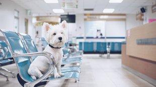 Hogyan segítsünk kutyánknak, ha fél az állatorvostól?