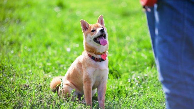 Egyszerű trükkök: hogyan tanítsuk kutyusunkat?