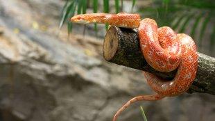 Kihívások: élet egy kígyóval