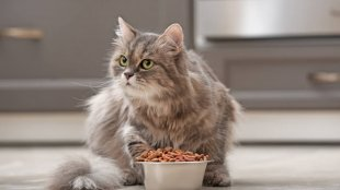 Érzékeny cicák táplálása