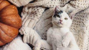 Őszi cica, gyenge cica?