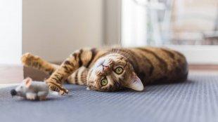 Kössük le cicánk figyelmét! Tuti játéktippek