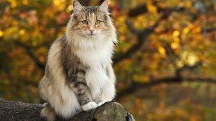 Így készítsd fel a cicádat az őszre