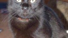 Jetta fiatal, nyugalomra vágyó cica