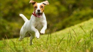 Milyen mozgásigényű kutya illik hozzánk?