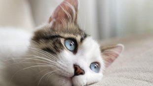 Mindent a macskaepilepsziáról
