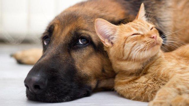 Kutya-macska barátság: az összeszoktatás lépései