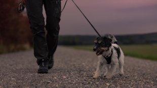 Biztonságos esti séta kutyusunkkal