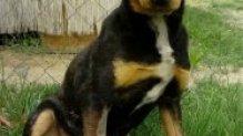 Dorko is szerető családra vár!!!