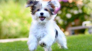 Hogyan tanítsuk meg kutyusunknak, hogy ne legyen az útban, amikor autóval állunk be a kertbe?